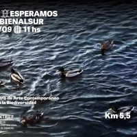 http://www.balambartolome.com/files/gimgs/th-73_73_bienalsur-invitacion.jpg
